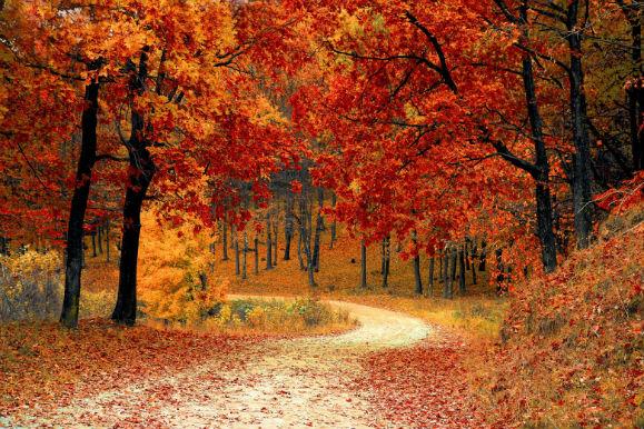 yoga naturopathie en automne sortie botanique