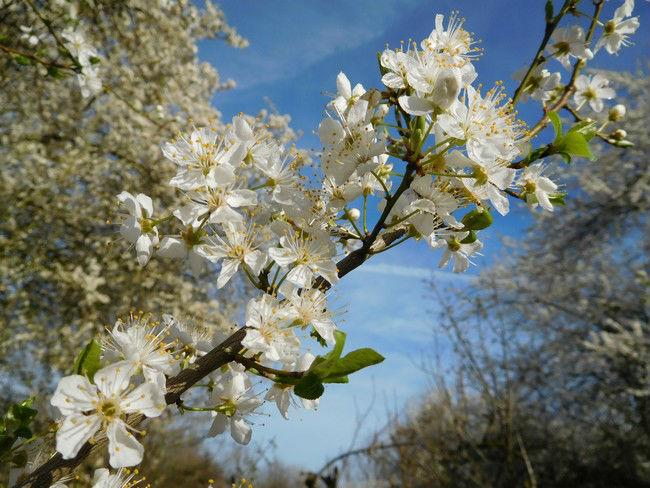 Sortie botanique: plantes sauvages comestible et médicinales en anjou